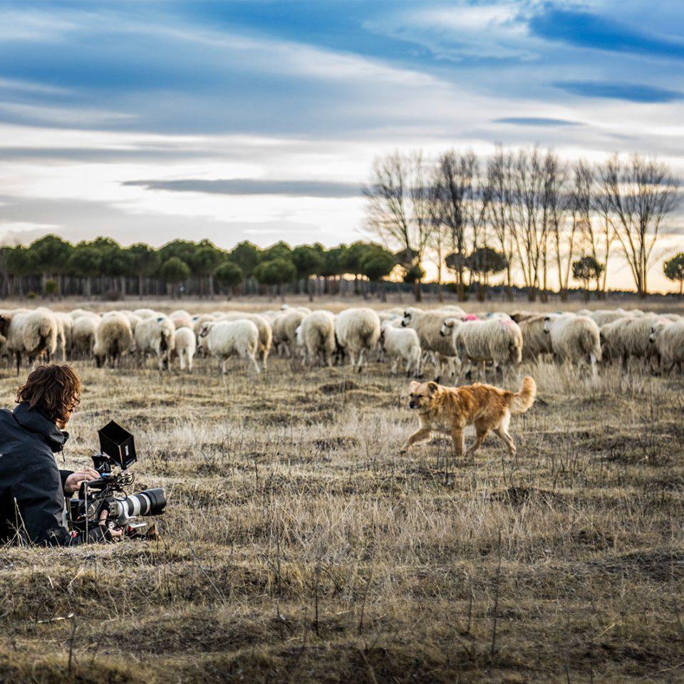 madrid_cameraman_rotterdam_roryvandenberg
